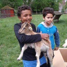 Børn med geder i ByOasen